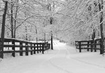 021021095545p2262421_bw_web_t.jpg snow